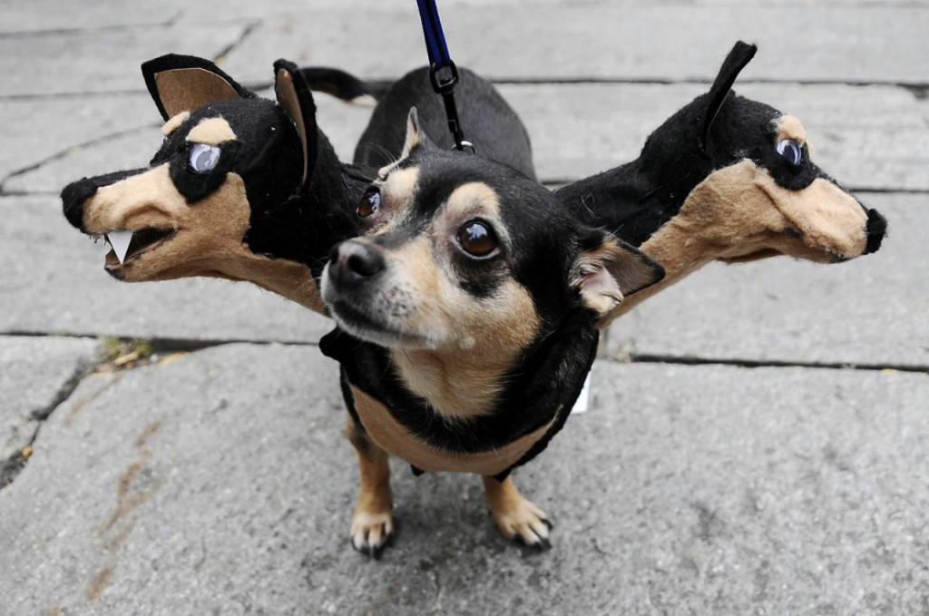 funny-three-headed-dog-costume-for-halloween-53eab7b08de95